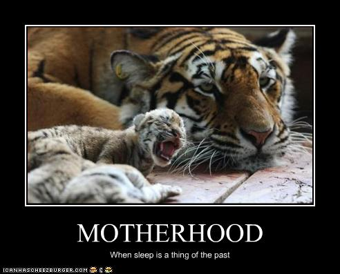 The expression on this Mama Tiger's face says it all! As a Mom of not only a preteen son and two four-year-old daughters, I can definitely relate :)